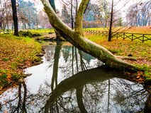 Árbol doblado sobre el agua Foto de archivo