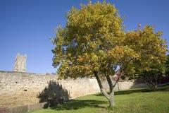 Árbol en argumentos de la iglesia de la hoja del otoño del estado glastonbury de la abadía Foto de archivo