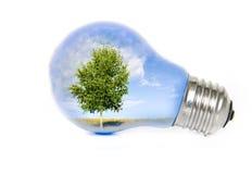 Árbol en bombilla Imagen de archivo libre de regalías