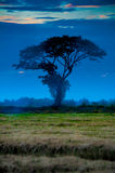 Árbol en crepúsculo Fotos de archivo libres de regalías