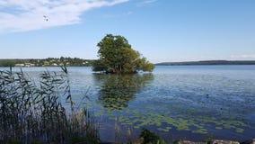 Árbol en el agua Fotografía de archivo