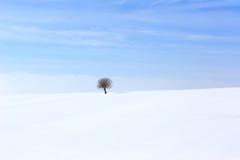 Árbol en el ambiente suave, tranquilo en invierno Imagen de archivo