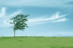 Árbol en el viento Foto de archivo libre de regalías