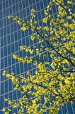 Árbol en la ciudad Imagenes de archivo