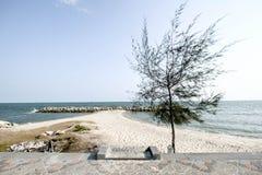 ?rbol en la playa imágenes de archivo libres de regalías
