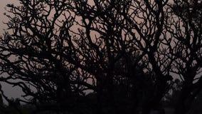 ?rbol en la puesta del sol en la India almacen de video
