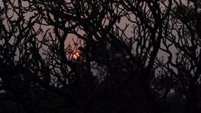 ?rbol en la puesta del sol en la India almacen de metraje de vídeo