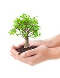 Árbol en manos Imágenes de archivo libres de regalías