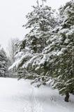 Árbol en nieve Foto de archivo