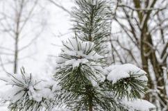 Árbol en nieve Imagen de archivo libre de regalías