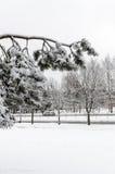 Árbol en nieve Imagen de archivo