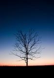 Árbol en noche Foto de archivo libre de regalías