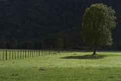 Árbol en un campo Foto de archivo libre de regalías