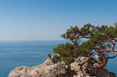 Árbol en una roca. Fotografía de archivo