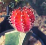 ?rbol hermoso del cactus en los jardines al aire libre y los parques p?blicos imagen de archivo