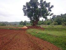 Árbol interceptado del camino Fotos de archivo libres de regalías
