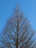 Árbol marchitado Fotografía de archivo