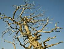 Árbol muerto contra el cielo Imagenes de archivo