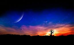 Árbol muerto en la puesta del sol Foto de archivo libre de regalías