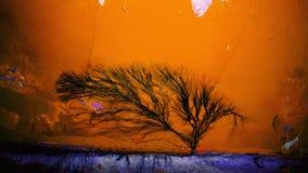 Árbol negro Fotos de archivo libres de regalías