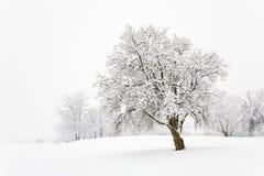 Árbol Nevado Imagenes de archivo
