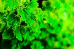 ?rbol, plantas, bosque y flores hermosos del verde de la hoja en los jardines y los parques al aire libre fotos de archivo libres de regalías