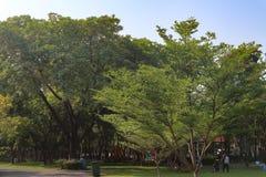 ?rbol, plantas, bosque y flores verdes hermosos en los jardines y los parques al aire libre imagen de archivo libre de regalías