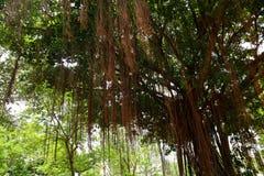 ?rbol, plantas, piedra del bosque y flores verdes hermosos en los jardines al aire libre y los parques p?blicos foto de archivo libre de regalías
