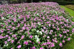 ?rbol, plantas, piedra del bosque y flores verdes hermosos en los jardines al aire libre y los parques p?blicos imagenes de archivo