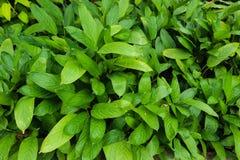 ?rbol, plantas, piedra del bosque y flores verdes hermosos en los jardines al aire libre y los parques p?blicos fotografía de archivo libre de regalías