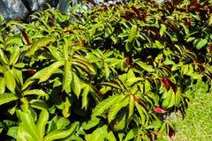 ?rbol, plantas, piedra del bosque y flores verdes hermosos en los jardines al aire libre y los parques p?blicos foto de archivo