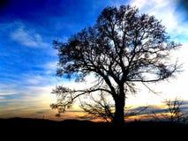 Árbol poderoso Imagen de archivo