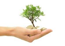 Árbol que crece del dinero Imagenes de archivo