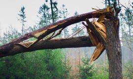 ?rbol quebrado en el bosque foto de archivo libre de regalías