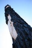 Árbol quemado Fotografía de archivo libre de regalías
