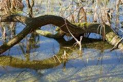 ?rbol seco en el lago imagenes de archivo