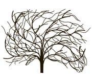 Árbol sin las hojas Fotografía de archivo libre de regalías