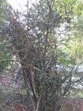 Árbol sin las hojas Foto de archivo
