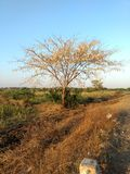 Árbol sin las hojas Fotos de archivo libres de regalías