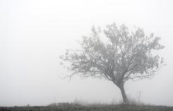 Árbol solitario en la niebla Fotos de archivo