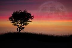 Árbol solitario en la puesta del sol Foto de archivo libre de regalías