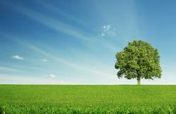 Árbol solo Fotografía de archivo libre de regalías