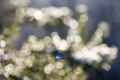 Árbol Spruce en invierno con el boke abstracto de la falta de definición en luz del sol Imagen de archivo