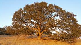 Árbol viejo Fotografía de archivo libre de regalías