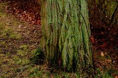 Árbol viejo Imágenes de archivo libres de regalías
