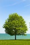 Árbol y agua solitarios Foto de archivo libre de regalías