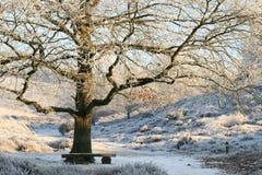 Árbol y banco hivernales de roble Foto de archivo libre de regalías