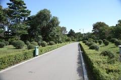 Árbol y callejón Fotos de archivo