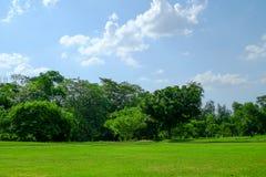 Árbol y césped en un día de verano brillante en parque público Imagen de archivo