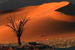 Árbol y duna Fotografía de archivo